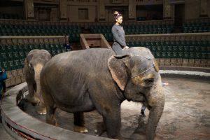 Девочка на слоне