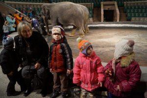 Фото на фоне слонов