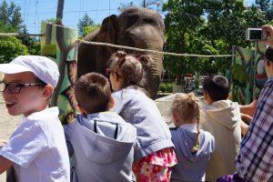 Знакомимся со слоном