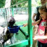 кормим страуса
